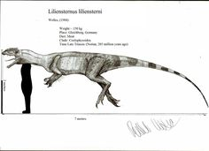 Liliensternus is the biggest theropod of the triassic, and guess what, itcomes from Germany ! Liliensternus was first described as aspecies of halticosa. Walking With Dinosaurs, All Dinosaurs, Dinosaur Crafts, Dinosaur Art, Paper Plate Animals, Dinosaur Drawing, Ocean Crafts, Jurassic Park World, Prehistoric Creatures