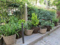 Permis de végétaliser à Paris : sous les pavés, l'herbe