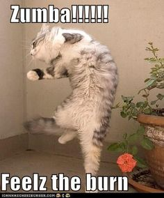 Zumba cat feelz the burn! cpinnell.zumba.com  www.fb.com/ZumbainLaCrosse