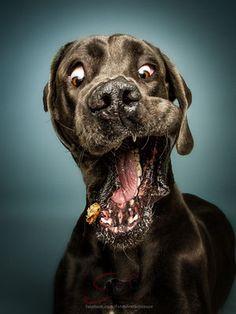 Dogs Catching treats (scheduled via http://www.tailwindapp.com?utm_source=pinterest&utm_medium=twpin&utm_content=post105427235&utm_campaign=scheduler_attribution)