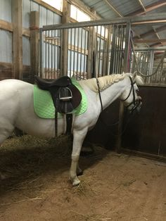 A cute pony ready for ridding