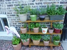 15 Best Small Space Gardening Ideas Images Vertical Vegetable