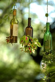 Use old bottles for hanging plants
