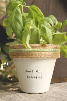 "Herb Puns | Dont Stop Beleafing! 4"" and 6"" pots available for your indoor herb ..."