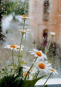 يارب بعدد قطرات المطر امطرنا فرحا لا ينتهي وحقق امنياتنا اللهم اجعل لنا مع كل قطرة مطر تفريجا وسعادة و Nature Photography Rainy Day Wallpaper Beautiful Flowers