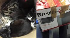 Cats stuffed inside sealed box, dumped in freezing temperatures in Manchester! Demand Justice!   YouSignAnimals.org