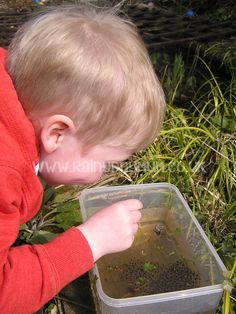 Simple Nature Journalling for preschoolers - collecting tadpoles from the pond and observing them at home and recording the progress in their own simple nature journal