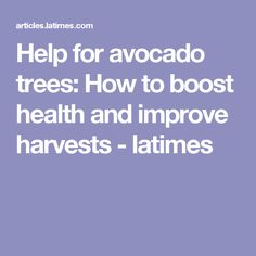 Help for avocado trees: How to boost health and improve harvests - latimes