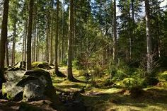 Image result for forest photography