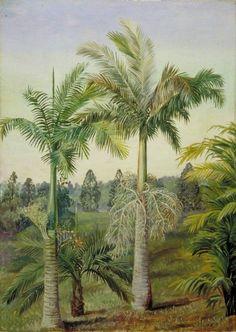Brisbane Botanic Gardens - Marianne North