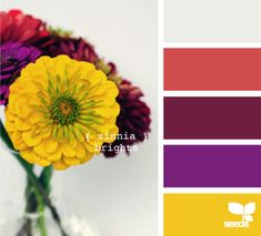 Wedding Colors Purple Summer Design Seeds Ideas For 2019 Lila Palette, Purple Palette, Wedding Color Combinations, Color Combos, Sweet Home, Color Palate, Design Seeds, Zinnias, Color Swatches