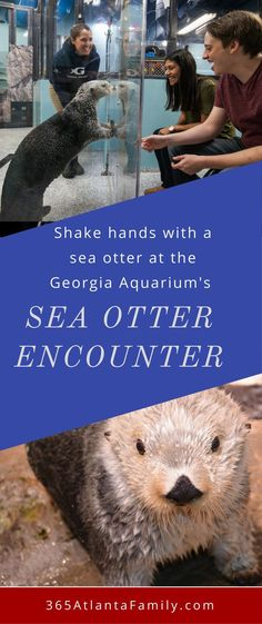 Georgia Aquarium: Shake Hands with Otters and Other Intimate Encounters. This experience was incredible. We were able to get up close, and really get to know the little Cruz, one of the Georgia Aquarium's sea otters. During the session we were able to pet Cruz, shake hands and feed him.
