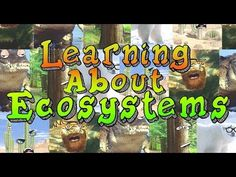 Learning About Ecosystems - YouTube