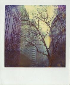 #polaroid #nature #unexpectedbeeauty #city