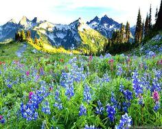 красивый весенний пейзаж вектор