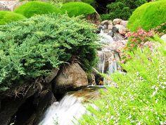 Home water garden ideas