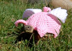 A tortoise on the pig fly