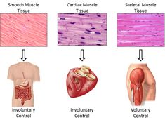 visual tissue types - Google Search