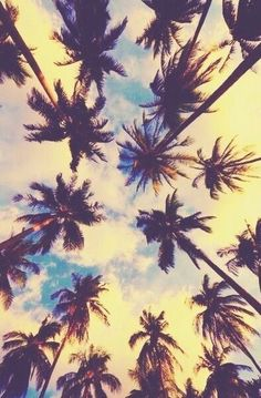 Palm trees and sunsets. #california