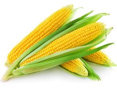 Maize . the staple food of Zambia