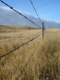 My most favorite picture that I've taken in Saskatchewan Country Fences, Country Roads, Saskatchewan Canada, Bull Riders, Call Of The Wild, Country Lifestyle, Farm Fence, Down On The Farm, Barbed Wire