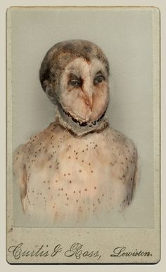 Sara Angelucci's intriguing series titled Aviary recalls the past to create strange portraits of birds that are superimposed onto anonymous nineteenth century cartes-de-visite (small, business card sized) photographs. Collages, Extinct Birds, Stippling Art, Art Folder, Bird Feathers, Artist At Work, Beautiful Birds, Vintage Photos, Creatures