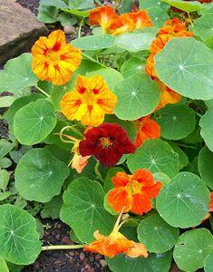 Garden Photos, Autumn Garden, Types Of Plants, Planting Seeds, Fungi, Japanese Art, Spring Flowers, Flower Art, Flower Arrangements