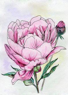акварельные цветы пионы - Поиск в Google