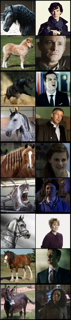 Equine animals that look like the Sherlock cast. :) Sherlock is officially a black stallion. ;) In case you forgot, Benedict Cumberbatch rode the black horse in Warhorse... ah John and the fluffy pony!! i want this fluffy pony
