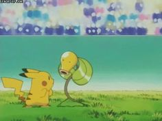 I have plenty more bellsprout pictures to come - Pokemon Memes Top Pokemon, Pokemon Gif, Pokemon Memes, Pokemon Cosplay, Anime Cosplay, Ice King, Tweety, Winnie The Pooh, Manga Anime