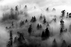 This image is an example of the Figure-Ground Relationship concept. I chose this image because the fog which is the dominant space comes to the foreground. The trees are the negative space because that is what you see after the fog.