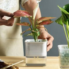 hydroponic self planter - Google Search Grow Kit, Hydroponics, Glass Vase, Planters, Google Search, Home Decor, Decoration Home, Room Decor, Hydroponic Gardening