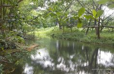 El Rio Mayabeque en la zona del Embarcadero