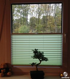 Grünes Wohnzimmer Plissee | green pleated blind in a living room
