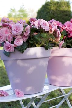 Pink Begonias in pink pots. Pretty.