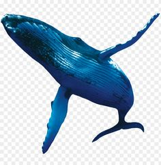 humpback whales whale PNG image with transparent background png Free PNG Images in 2020 Whale Humpback whale Png images