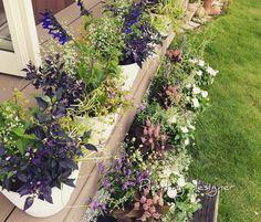 Summer planting design.