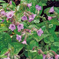 10 long flowering plants for hummers