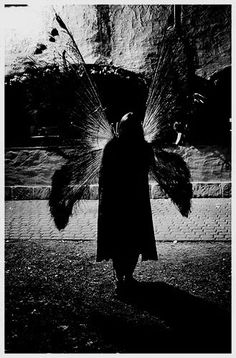 ☾ Midnight Dreams ☽  dreamy & dramatic black and white photography - night fairy