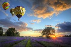 Suitcases and Sunglasses ♥ Our World's View  Beautiful image of stunning sunset over vibrant ripe lavender fields in English countryside landscape with hot air balloons flying high above.