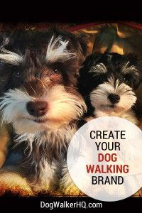 3 Simple Steps to Create your Dog Walking Service Brand