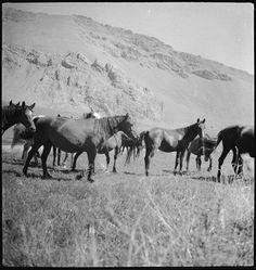 SLA-Schwarzenbach-A-5-06/189 Persien, Elburs-Gebirge (Elburz): Pferde, 1935-1935 (Dokument)