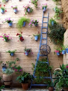 Taken in Cordorba Spain in 2007.  Home owners opened up their gardens for tourists.- If only some of the downtown business owners would do this! Such a pretty idea!