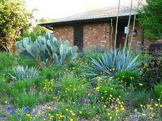Plano Prairie Garden: Finishing Touches Prairie Garden, Dry Garden, Stock Tank, Drought Tolerant Plants, Native Plants, Landscape, Planting, Texas, Scenery