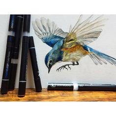 @kawaikyoko their AMAZING bird illustration
