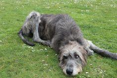 Gentle giant, resident of Holyhead. Anglesey, Gentle Giant, Flora, Coast, Album, Animals, Animales, Animaux, Plants