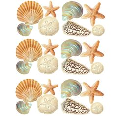Amazon.com: Wallies Peel & Stick Vinyl Wall Decals, Seashore Theme Wall Stickers, Includes 24 Seashell Stickers: Home & Kitchen
