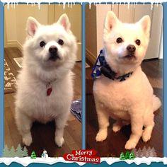 Happy Holiday's From Buddy xo