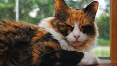 The Top 20 Ways to Calm Your Cat