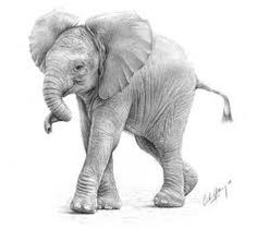Orphaned  bebe elephants.... Baby Elephant Drawing, Elephant Sketch, Baby Drawing, Elephant Drawings, Pencil Drawings Of Animals, Animal Sketches, Bird Drawings, Indian Elephant, Elephant Love